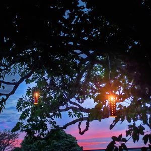 Sunset LED Pin-Hole Tree Lights